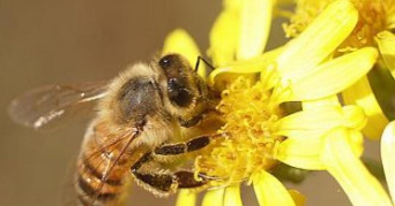 ape-mellifica-1764x700