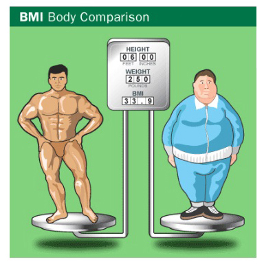 bmi body composition